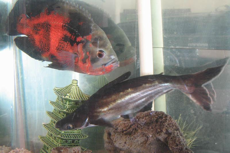 Fish Page